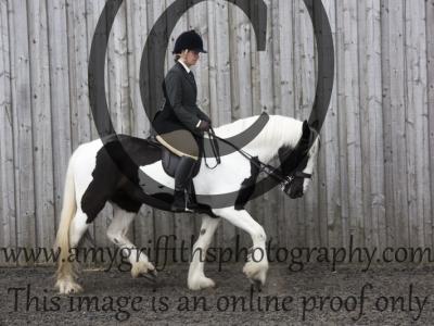 Class 101: Riding Club Type Horse/Pony