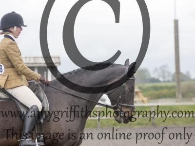 Class 103: Open Ridden Hunter/Sports Horse Type