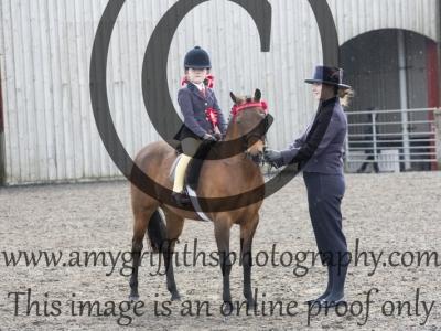Class 34: Novice Show Pony