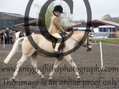 Mini Show Pony/ Show Hunter Pony Championship