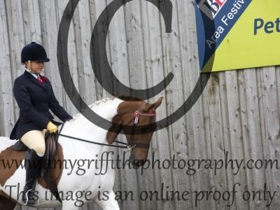 Class 35: Open Show Pony
