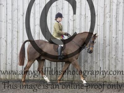 Show Hunter/ Show Pony Championship