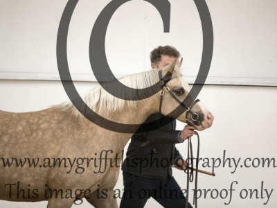CH 25: Supreme Welsh Foal