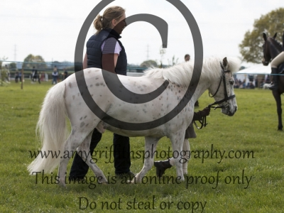 Class 37 – Bonny Pony