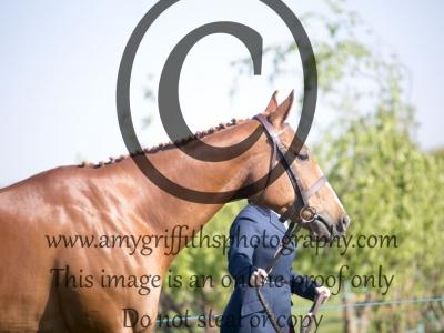 Class 21 – Inhand Ex- Racehorse