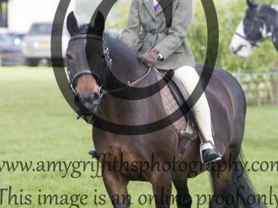 Class 23 – Veteran Horse or Pony