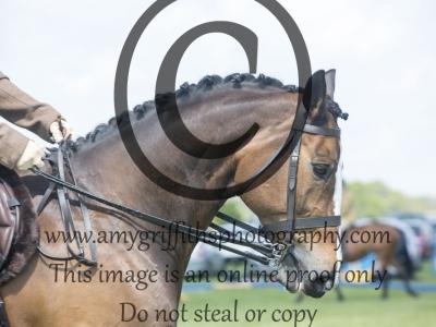 Class 25 – Ridden Horse
