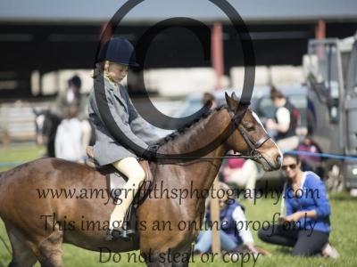 Class 26 – Pony Club Pony under 13hh