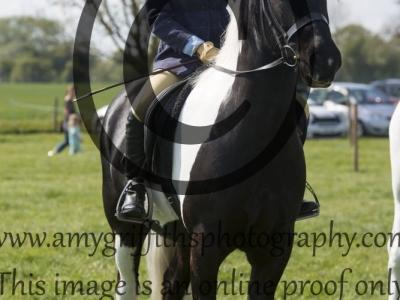 Pony Club Pony Championship