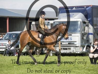 Class 28 – Best Riding Club Horse