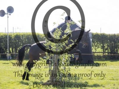 Class 20 – Working Hunter Horse