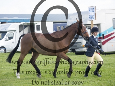 Class 12 – Best Conditon Horse