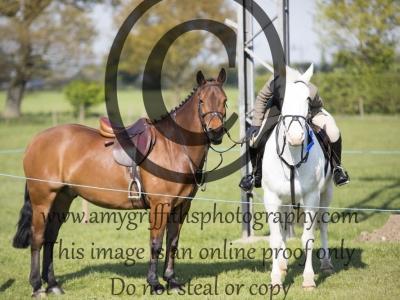Class 8 – Open Pony