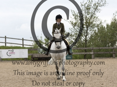 Class 40: Open Working Hunter Horse