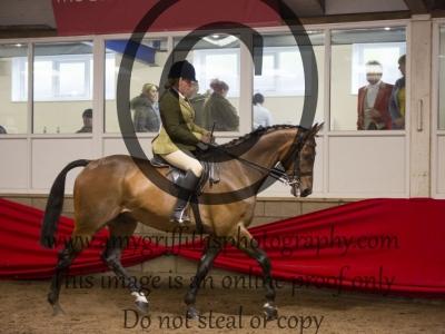 Class 29: Ridden Sports Horse