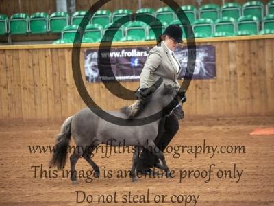 Class 39 – Royal International Horse Show Stallions