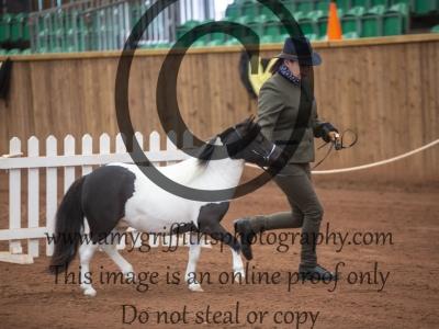 Class 40 – Royal International Horse Show Mares