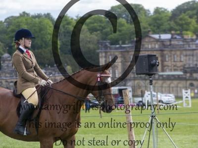 Class 11 – Racehorse to Riding Horse