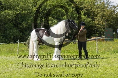 Class 3 – CHAPS (UK) Native/Cob/Traditional Open In-Hand Qualifier