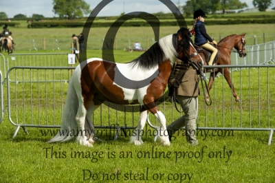 Class 97 – CHAPS(UK) Native/Cob/Traditional Youngstock Inhand Qualifier