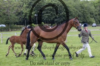 Class 17 – Open Hunter Brood Mare Inhand
