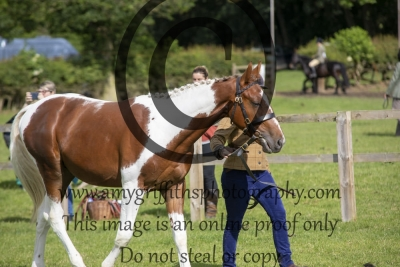 Class 19 – Yearling Hunter Inhand