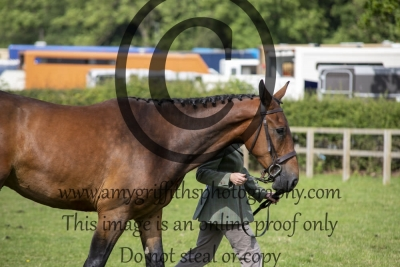 Class 21 – Three Year Old Hunter Inhand
