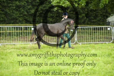 Class 44- Riding Pony Yearling