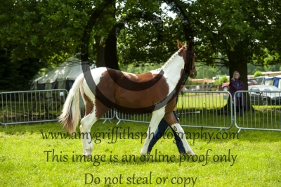 Class 48- Riding Pony Stallion