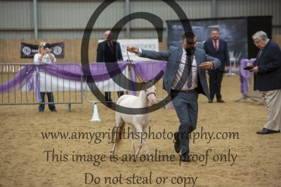 """Class 61 – Yearling Over 28"""" Up to & Inc 30"""""""