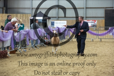 """Class 81 – Yearling Over 28"""" Up to & Incl 30"""""""