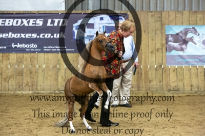 """Class 88 – Senior Stallion Over 28"""" Up to & Incl 30"""""""