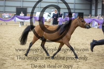 """Class 89 – Senior Stallions Over 30"""" Up to & Incl 32"""""""