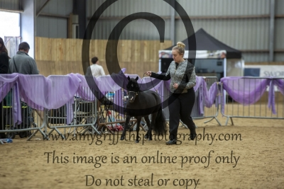 """Class 90- Senior Stallions Over 32"""" Up to & Incl 34"""""""