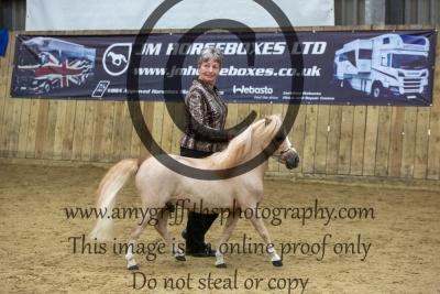 Class 95 – Any Other Colour Stallion/Gelding