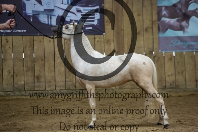 """Class 108 – AMHR Junior Mare – Under 33"""" Yearlings and Two Year Olds"""