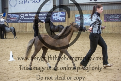 Class 110 – Junior Mare AMHR Grand and Reserve Champion