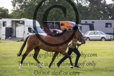 Hunter Pony Championship