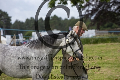 Class 39- NPS/Equestrian Marketplace Mountain & Moorland Small Breeds In Hand