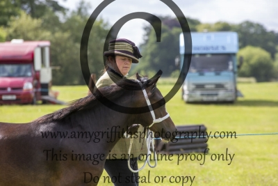 Class 40 – NPS/Equestrian Marketplace Mountain & Moorland Small Breeds Youngstock In Hand
