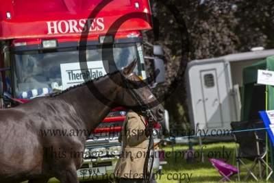 Class 18 – Sport Horse Breeding Broodmare