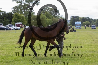 Class 20 – Yearling Potential Sport Horse