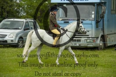 Working Hunter Pony Championship