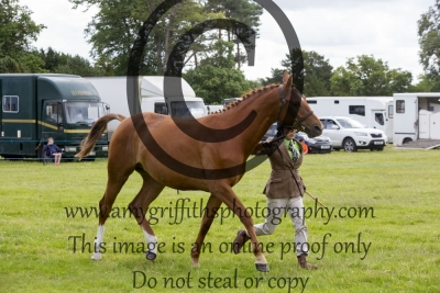 Class 21 – Two year old Potential Sport Horse