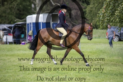 Show Pony Championship