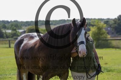 Class 3 – Handsome Horse