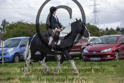 Class 6- Novice Horse