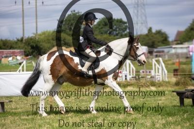 Class 7- Best Pleasure Horse/Pony