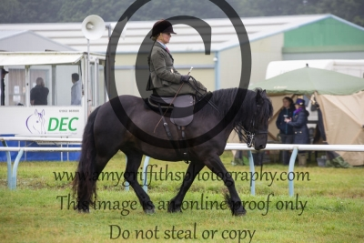 Class 54- Best Horse or Pony Side Saddle