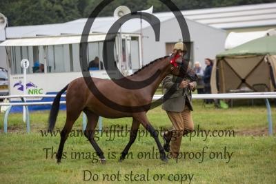 Class 64- Riding Pony/Hunter Pony Yearling